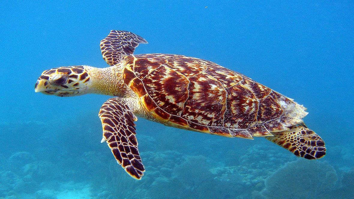 لاکپشت های دریایی برای تخم گذاری به سواحل بوشهر آمدند